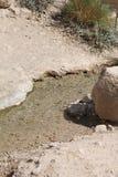 在大卫溪瀑布国家公园,死海,以色列的水小河 免版税库存照片