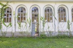 在大厦墙壁上的常春藤与残破的Windows的 图库摄影