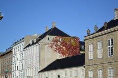 在大厦的常春藤藤在哥本哈根 免版税库存图片