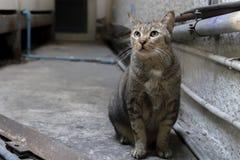 在大厦的灰色猫在低灯 免版税库存照片