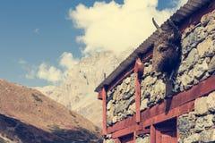 在大厦的牦牛头 免版税图库摄影