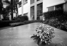 在大厦的花黑白照片 库存图片