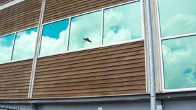在大厦的鸟反射 免版税库存照片
