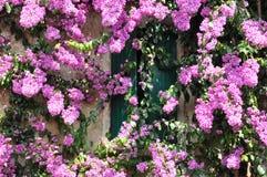 在大厦的紫色花 免版税库存图片