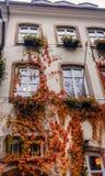 在大厦门面的秋天爬行物 图库摄影