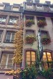 在大厦门面的秋天爬行物 库存图片