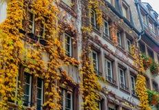 在大厦门面的秋天爬行物 免版税库存照片