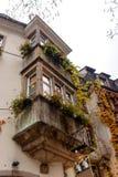 在大厦门面的秋天爬行物 库存照片