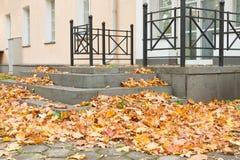 在大厦门廊附近的下落的叶子 免版税图库摄影