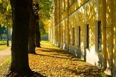 在大厦附近的秋天森林,黄色和绿色树 免版税库存照片