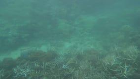 在大堡礁昆士兰澳大利亚的被漂白的珊瑚 影视素材