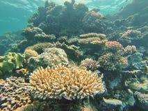 在大堡礁的珊瑚头 库存照片