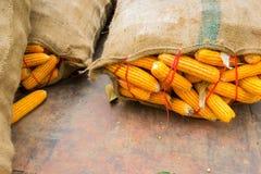 在大大袋的特写镜头干燥黄色玉米有copyspace的 免版税图库摄影