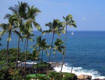 在大岛的热带手段在夏威夷 图库摄影