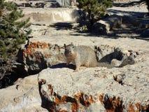 在大峡谷的一只灰鼠 免版税库存照片