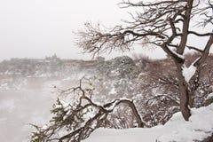 在大峡谷的结构树 免版税库存照片