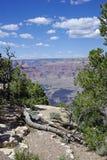 在大峡谷的边缘的烂掉的木头 免版税图库摄影