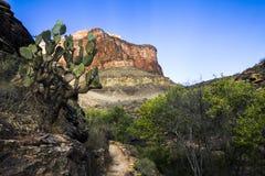 在大峡谷里面的绿色树 免版税库存图片