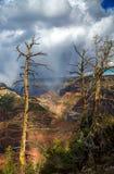 在大峡谷风暴前面的死的树 免版税库存图片