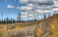 在大峡谷,北部外缘的秋天 库存图片