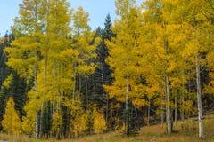 在大峡谷,北部外缘的秋天 库存照片