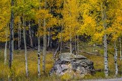 在大峡谷,北部外缘的秋天 免版税库存图片