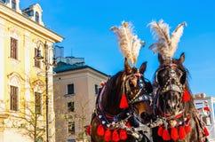 在大广场,克拉科夫,波兰的马支架 图库摄影