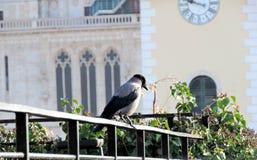 在大教堂前面的乌鸦 库存照片