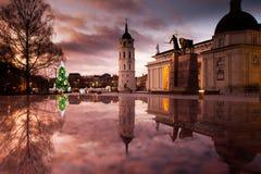 在大教堂正方形的圣诞树在维尔纽斯 库存照片