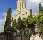 在大教堂附近的橘子树 免版税库存照片