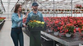 在大明亮工业,走与箱子的温室两人有很多花通过增长的植物行  股票录像