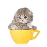 在大杯子的哀伤的小猫 背景查出的白色 免版税图库摄影