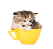 在大杯子的哀伤的小猫 背景查出的白色 库存照片