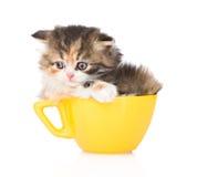 在大杯子的哀伤的小猫 背景查出的白色 免版税库存图片