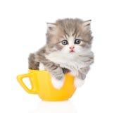 在大杯子的滑稽的小猫 背景查出的白色 免版税库存图片