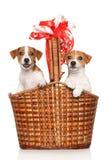 在大柳条筐的愉快的小狗 库存照片