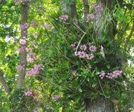 在大树的兰花 免版税库存图片