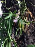 在大树的微型兰花 兰花是开花的花大家庭  免版税库存照片