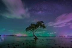 在大树的银河在热带海滩的海滩与天空 免版税库存图片