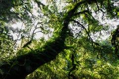 在大树的青苔 库存图片