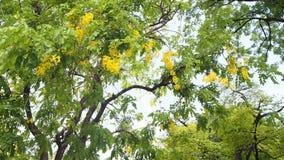 在大树的黄色花 免版税库存照片