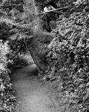 在大树附近的道路 库存照片