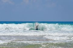 在大波浪里面的人 免版税库存照片