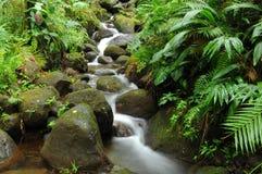 热带小河 库存照片