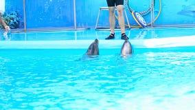 在大海的两只海豚 影视素材