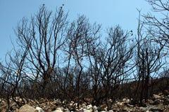 在大火以后 免版税图库摄影