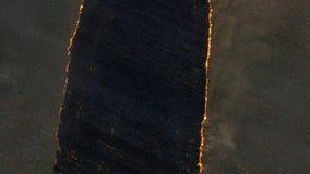 在大火的鸟瞰图在大麦田 在麦田的火 森林和草原火完全地毁坏 股票录像
