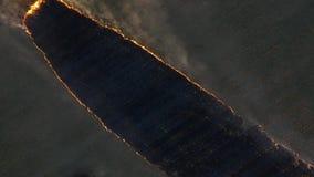在大火的鸟瞰图在大麦田 在麦田的火 森林和草原火完全地毁坏 影视素材