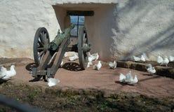 在大炮旁边的鸽子 库存图片