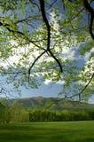 在大烟山,田纳西,美国Cades小海湾的春天  免版税库存照片